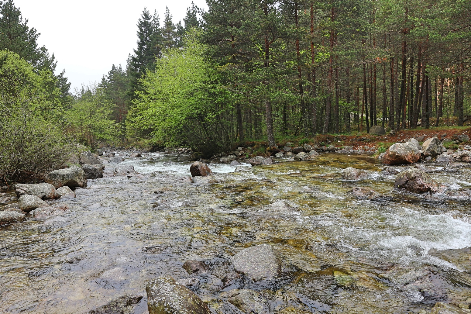 Fluss Beli Iskar im Nationalpark Rila